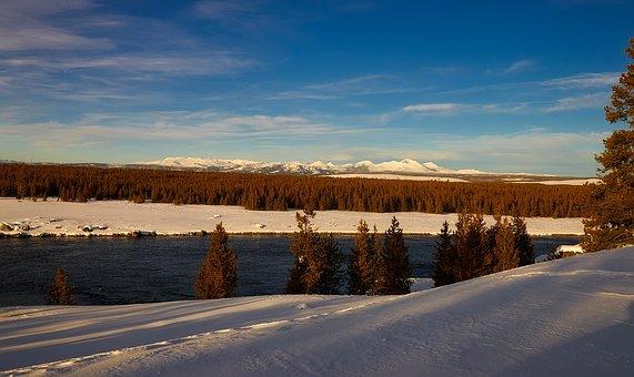 Yellowstone, National Park, Wyoming, Winter, Snow