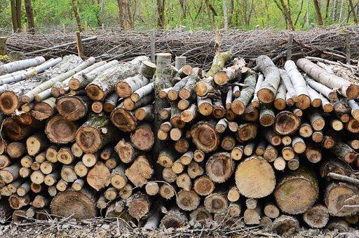 Piles Of Deadwood, Deadwood Hedge, Wood