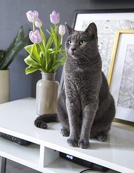 Cat, Portrait, Portraiture, Pet, Animal, Cute, Fur