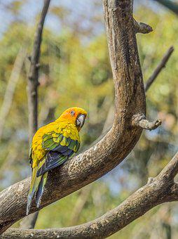 Parrot, Ave, Animals, Colors, Tree, Nature, Freedom