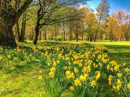 Daffodils, Osterglocken, Park, Spring, Bad Kissingen