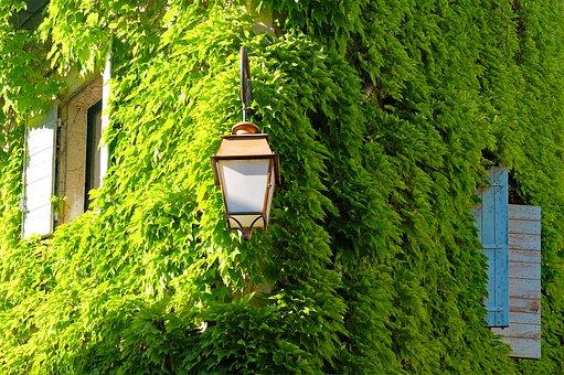 Viriginia Creeper, Ivy, House, Façade, Green, Building