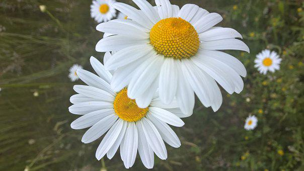 Nature, Landscape, Landscapes, Forest, Plant, Flower