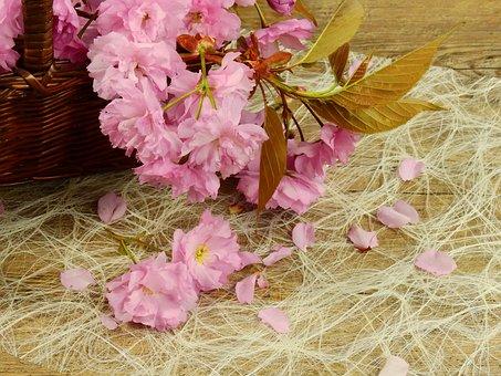Flowers, Bloom, Pink, Flower, Tree, Plant, Cherry