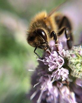 Bee, Flower, Purple, At Work, Nature, Spring, Honey