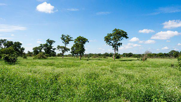 Landscape, Large, Green, Sky, Blue, Trees, South Africa