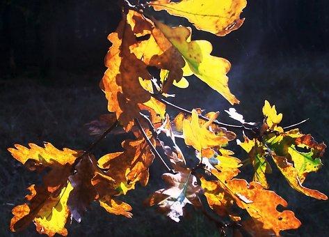 Fall Foliage, Back Light, Mark Brandenburg