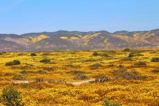 Carrizo Plain, Superbloom, Spring, California, Nature