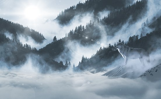 Wolf, Wolves, Snow Wolf, Landscape, Atmosphere