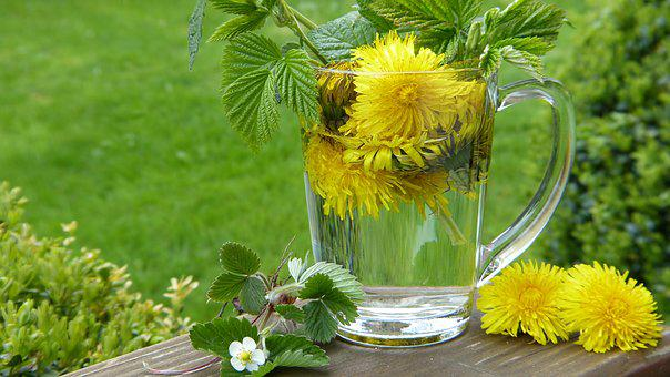 Dandelion, Taraxum, Tee, Strawberry Leaves, Blossom