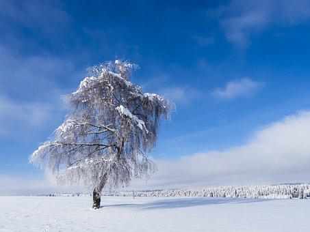 Wintry, Tree, Snowy