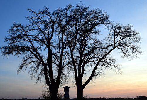 Tree, Winter, Kahl, Sunset, Field Cross, Evening, Mood