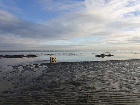 Beach, Dog, Water, Sea, Reflection, Mirror, Cockapoo