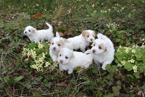 Dogs, Puppies, White, Animal, Petit, White Fur, Animals