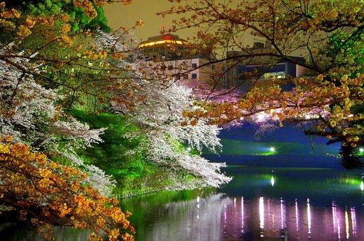 Chidorigafuchi, Cherry Blossoms, Spring, Japan, Castle