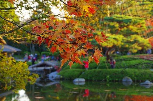 Early Autumn, K, Japanese Garden, Japanese Style
