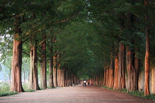 Damyang, Meta Sequoia, Road