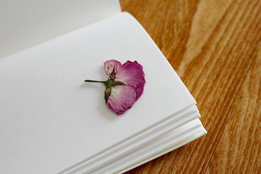 Rose, Book, Notebook, Registration Book, Book Pages