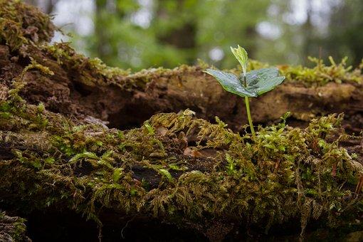 Seedling, Book Seedling, Tree Seedling, Rejuvenation
