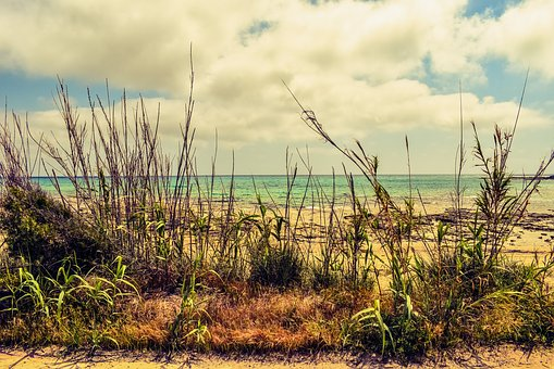 Reeds, Beach, Sea, Sky, Clouds, Scenery, Seaside