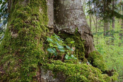 Book Seedling, Seedling, Tree Trunk, Rejuvenation