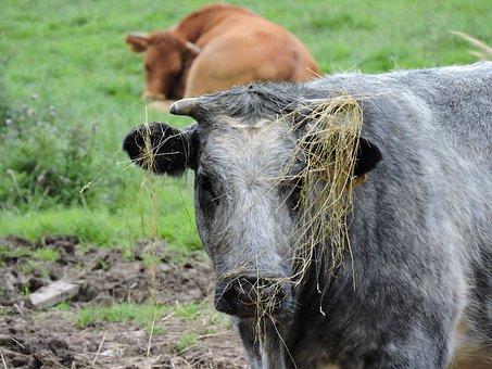 Untidy, Messy, Rough, Hay, Badhair, Badhairday, Farm