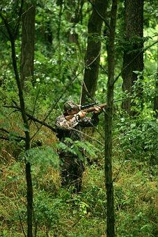 Tree, Animal, An, Aim, Takes, Hunter, Hunting, Fishing