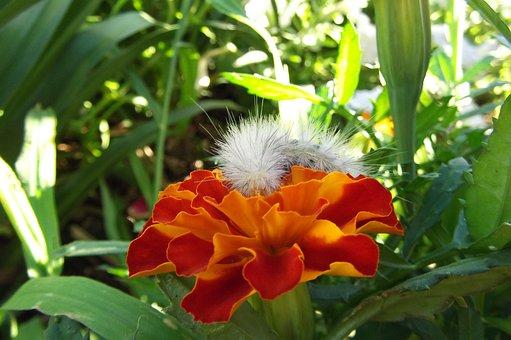 Caterpillar, Flower, Orange, White, Fuzzy, Garden