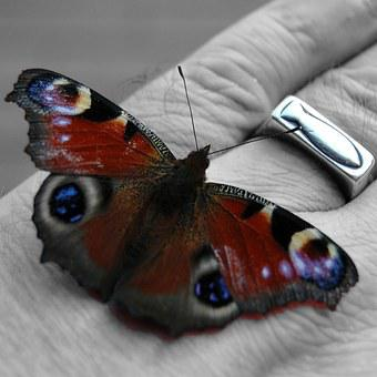 Hand, Butterfly, Fish, Insect, Wing, Symbol, Christian