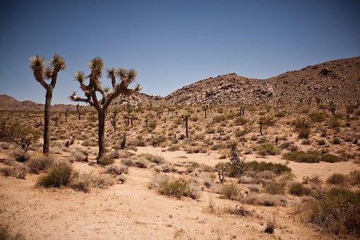 Usa, Travel, National Park, Joshua Tree, Tree, Desert