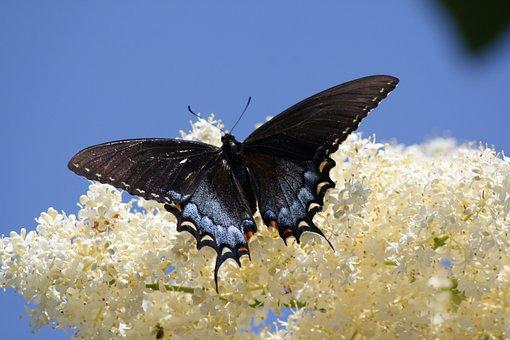 Butterfly, Butterflies, Flowers, White, Bush, Flight
