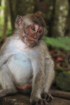 Bali, Monkey, Emotion, Funny, Portrait, Nature, Glance