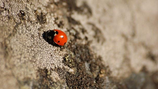 Ladybug, Dots, Stone, Red, Black, Grey, Insect