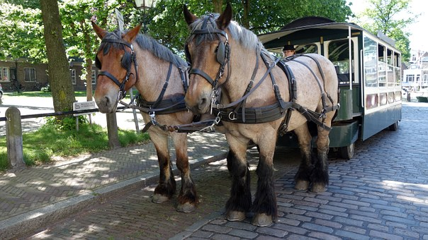 Horses, Tourism, Dordrecht, Netherlands, Holland