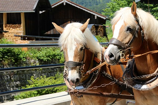 Horses, Draft Horses, Coach, Pferdearbeit Dishes