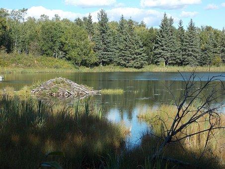 Lake, Reflections, Trees, Nature, Beaver Lodge, Scenic