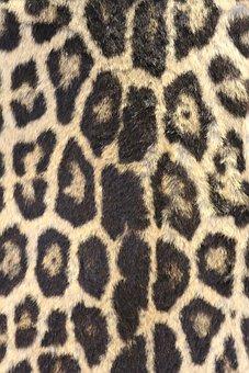 Leopard Print, Leopard Skin, Bold, Wildlife, Zoo