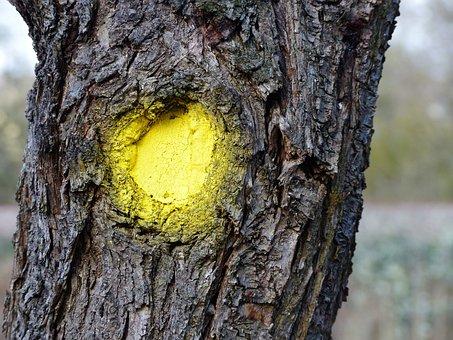 Log, Bark, Yellow Dot, Art, Tree Bark, Structure, Tree