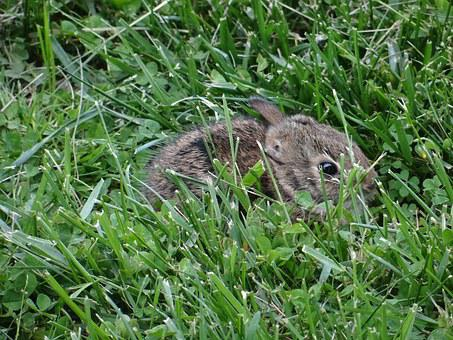 Bunny, Rabbit, Easter, Cute, Fuzzy, Lawn, Nature