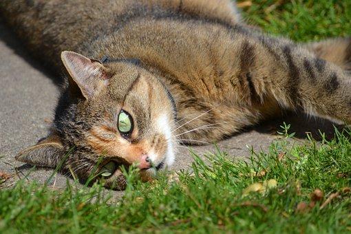 Cat, Grass, In The Grass, Pet, Cute, Beast
