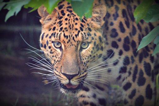 View, Portrait, Pet, Adorable, Animal, Head, Animals
