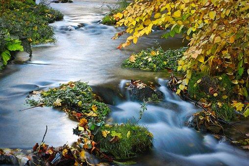 Racławka Valley, Racławka, Torrent, Forest, Autumn