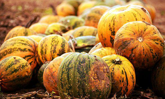 Pumpkin, Pumpkin Box, Squash, Color, Field, Pumpkins