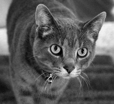 Rescue, Tabby, Cat, Domestic, Animal, Feline, Kitten