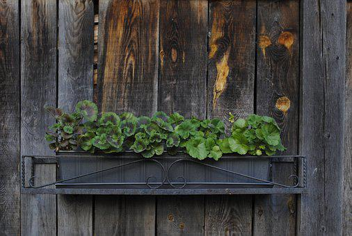 Plant, Planter, Rustic, Flower Box, Wooden