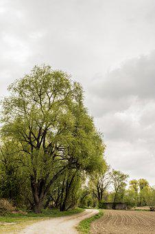 Nature, Away, Trees, Landscape, Summer, Trail