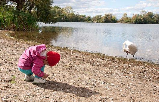 Swan, Baby Girl, Hoot, Child, Swans, Fun