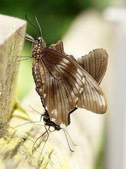 Butterfly, Exotic, Insect, Tropical, Animal, Wing