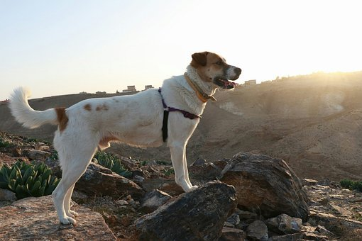 Dog, Pet, Sun, Animal, White, Canine, Puppy, Domestic