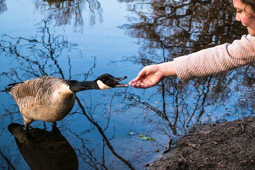 Canada Goose, Girl, Encounter, Contact, Get To Know